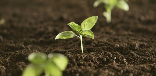five-easy-garden-plants-grow-seed-1-seedlings