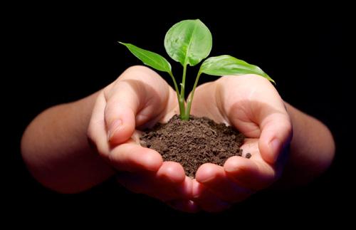 plant-grow-blk-500